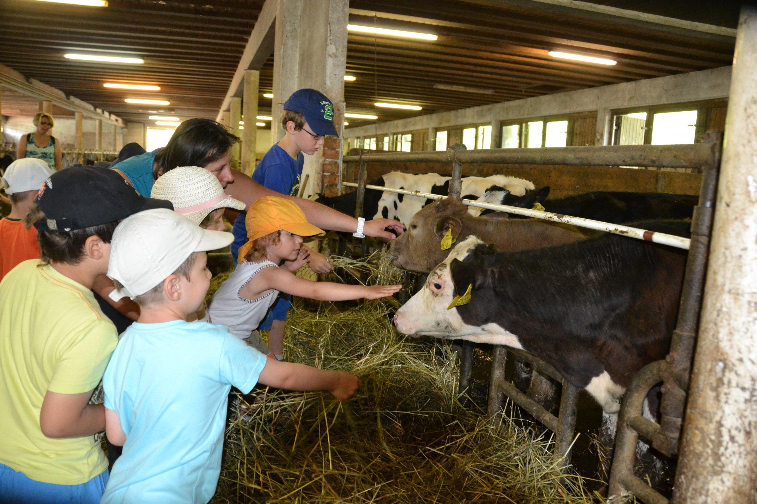 Annahof – biologische Landwirtschaft Fam. Schabbauer